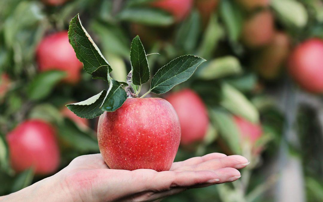 Idées de recettes pour la cueillette des pommes